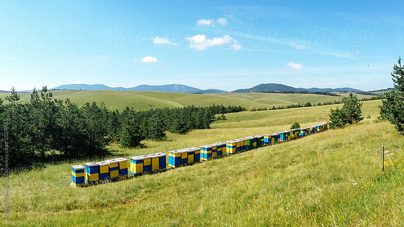 Wooden beehives at mountain by Marko Milovanović for Stocksy United