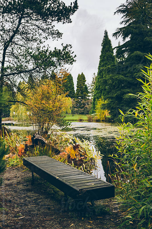 autumn garden by unite  images for Stocksy United
