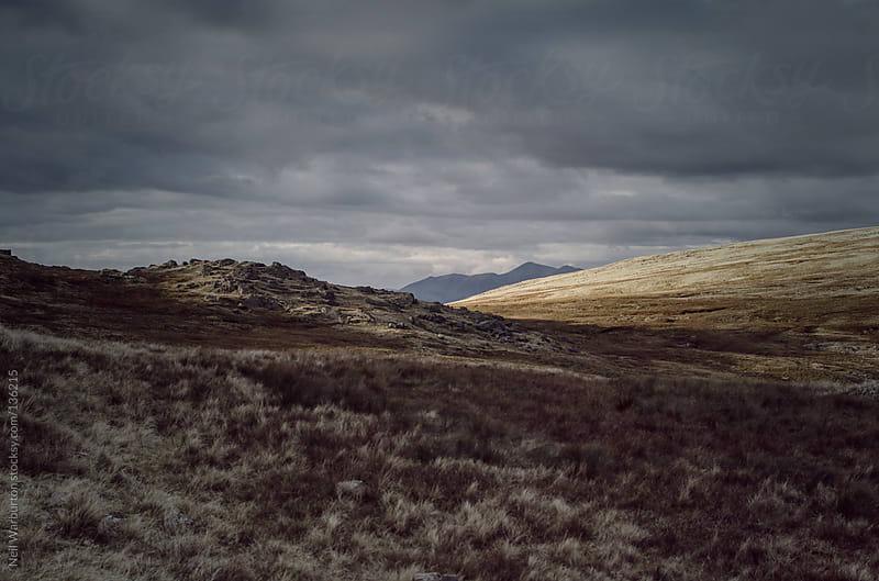 Wilderness by Neil Warburton for Stocksy United