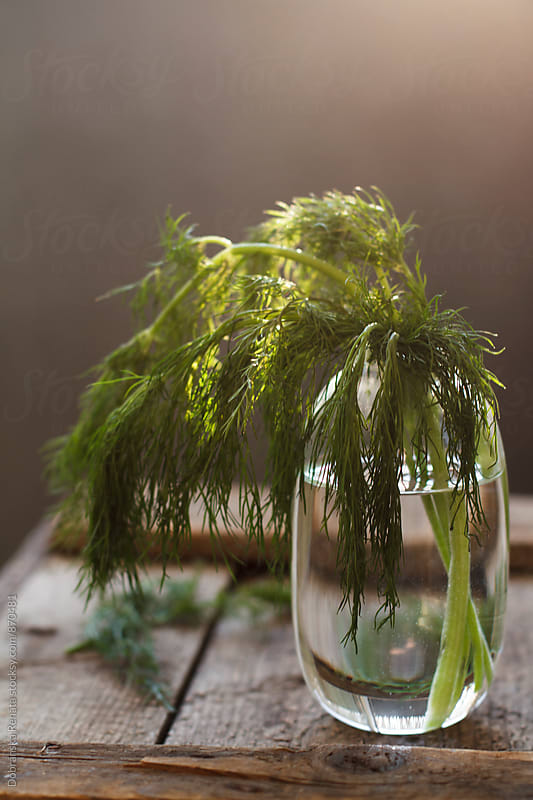Fresh Dill in a Vase by Dobránska Renáta for Stocksy United