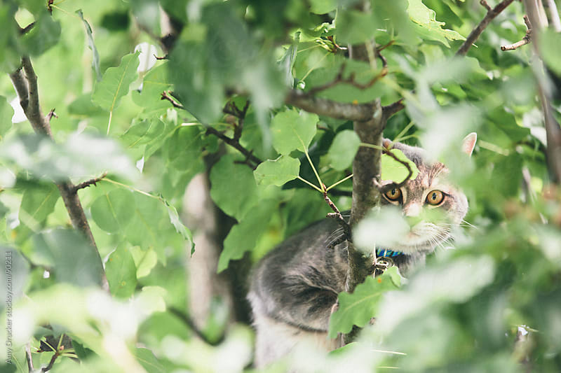 Cat Hiding in a Tree by Amy Drucker for Stocksy United