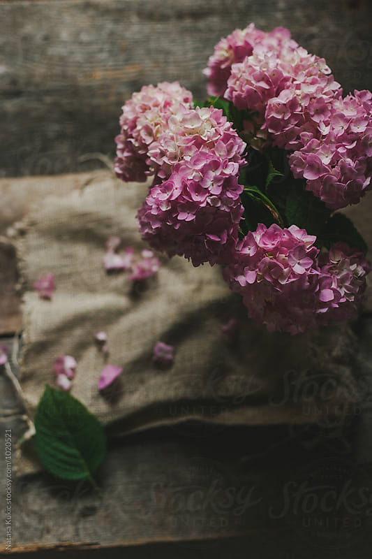 Bouquet of hydrangeas still life by Natasa Kukic for Stocksy United