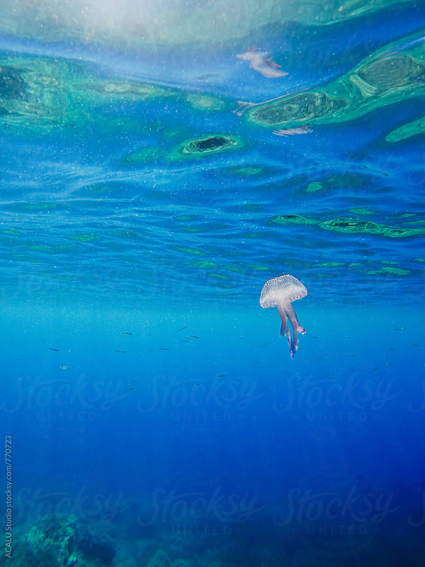 Jellyfish in the intense blue sea by ACALU Studio for Stocksy United