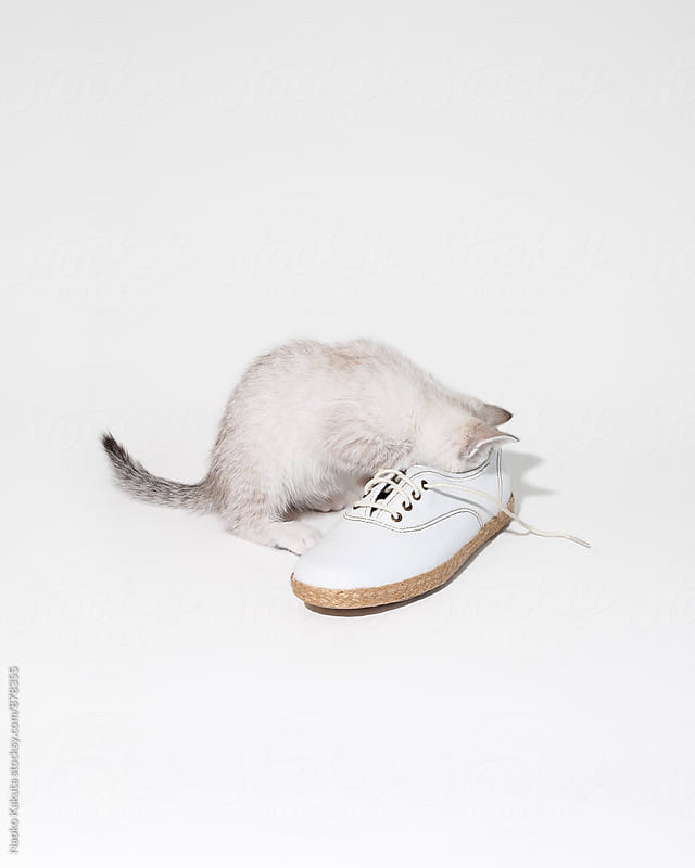 cat sticking head in a shoe by Naoko Kakuta for Stocksy United