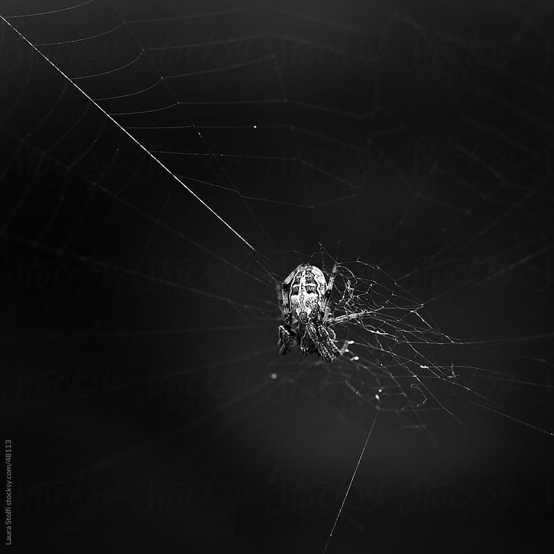 Black and white close-up of spider on its web by Laura Stolfi for Stocksy United