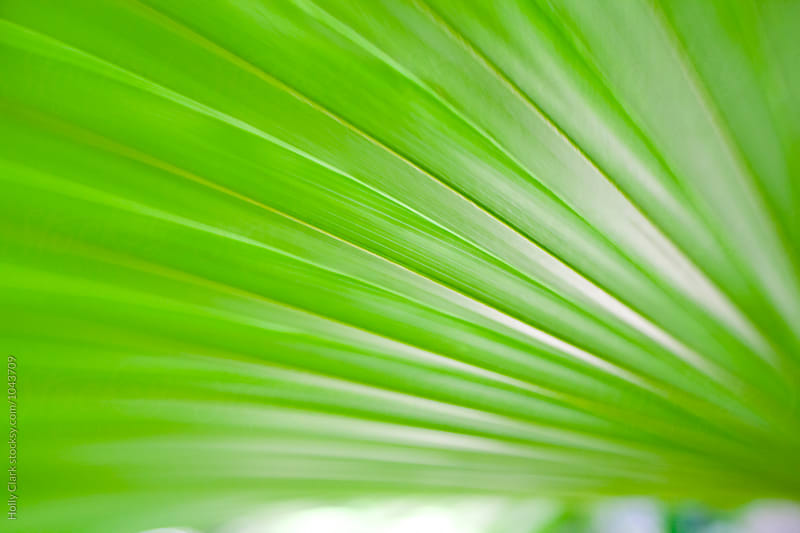 Abstract Palm Leaf by Holly Clark for Stocksy United