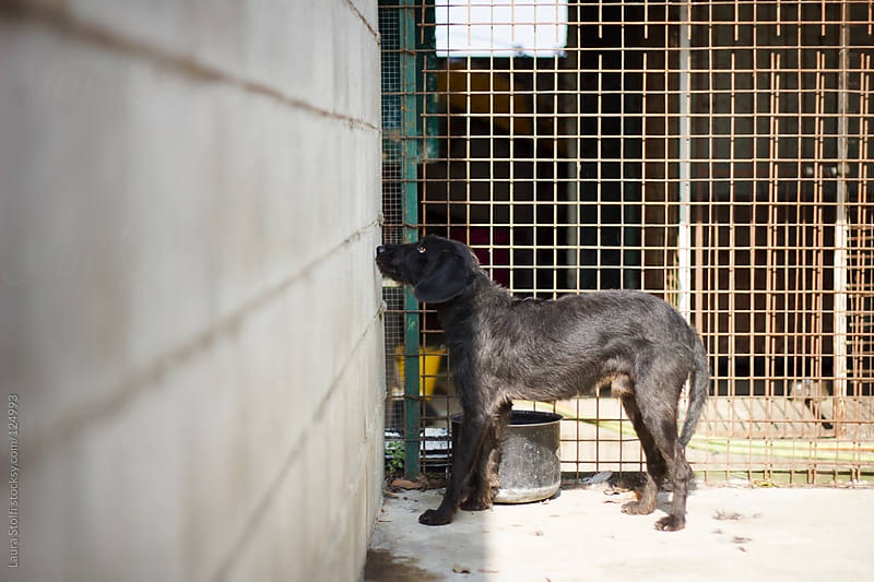 Stray dog in dog pound by Laura Stolfi for Stocksy United