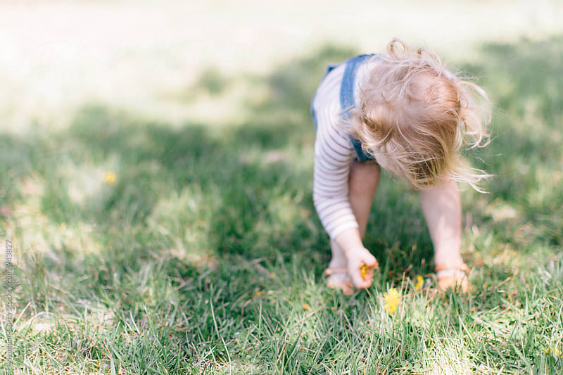 toddler picking flowers in the grass by Meaghan Curry for Stocksy United
