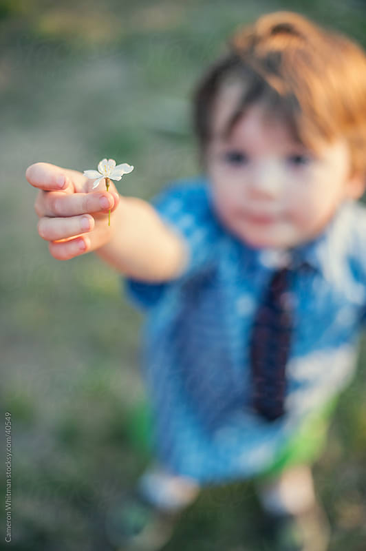 Little Boy Giving A Cherry Blossom by Cameron Whitman for Stocksy United