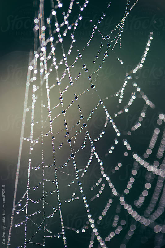 Macro of a droplet filled spider web with dew droplets by Carolyn Lagattuta for Stocksy United