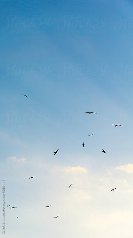 Gulls flying in the sky by ACALU Studio for Stocksy United