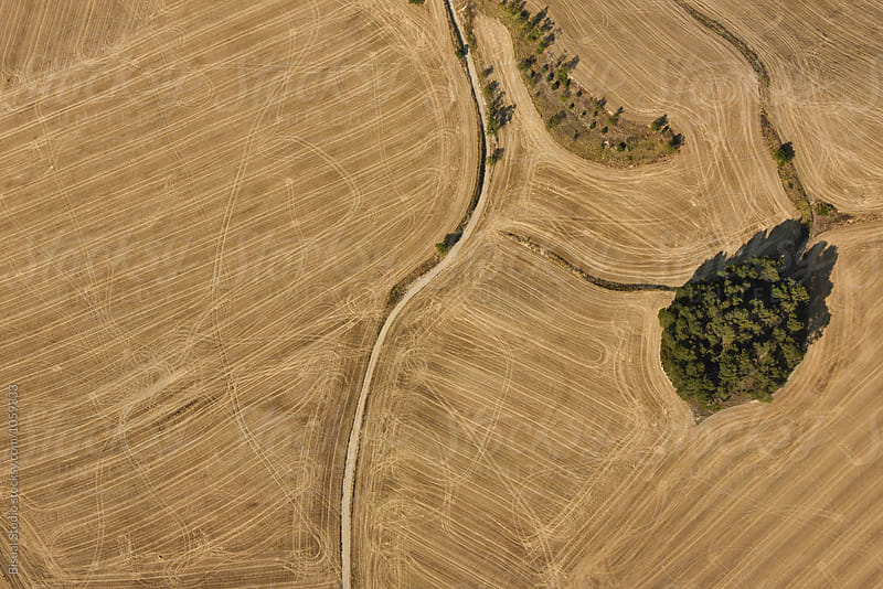 Aerial views of wheat fields in summer by Bisual Studio for Stocksy United