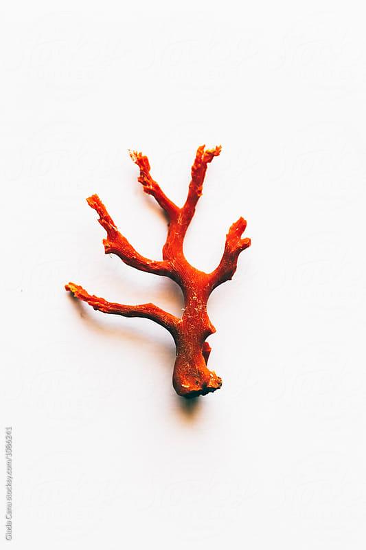 Coral still life by Giada Canu for Stocksy United