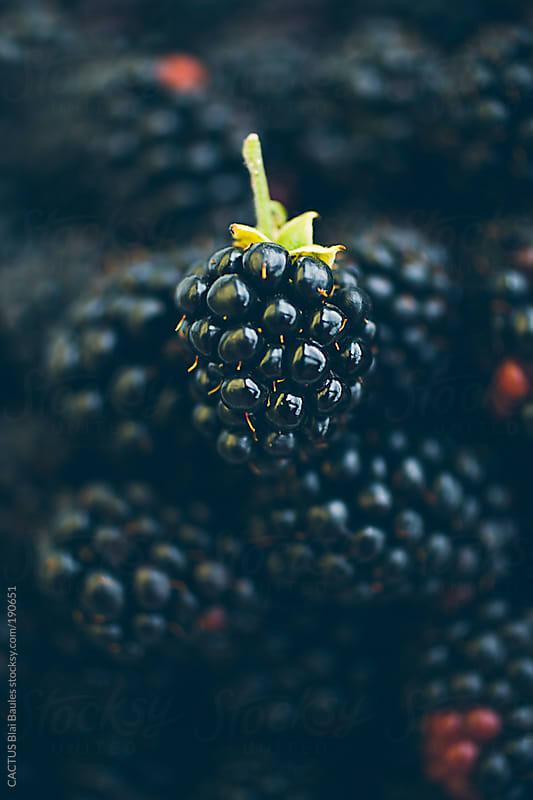Blackberries by CACTUS Blai Baules for Stocksy United