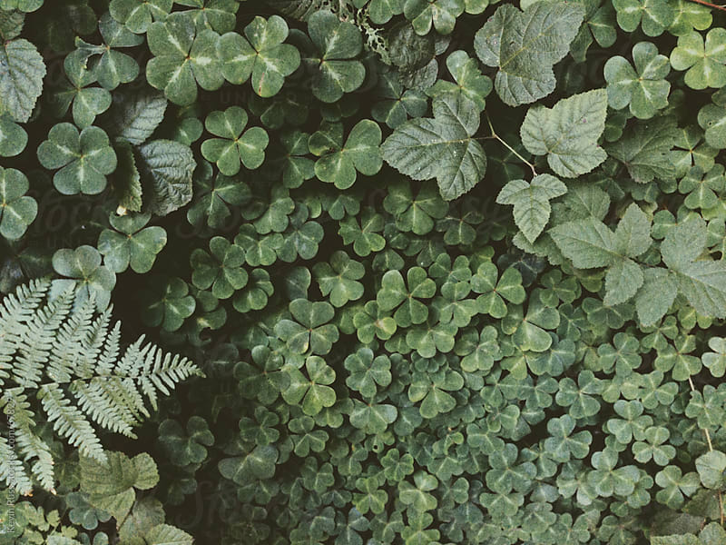 Forest Foliage by Kevin Russ for Stocksy United