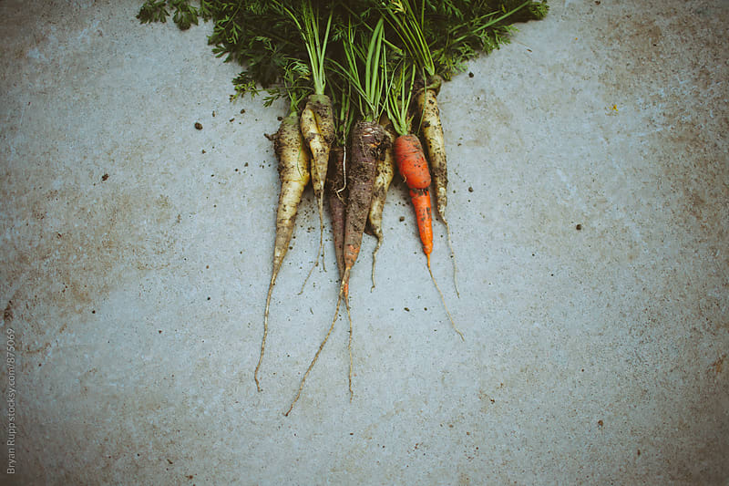 Freshly Harvested Carrots on Concrete by Bryan Rupp for Stocksy United