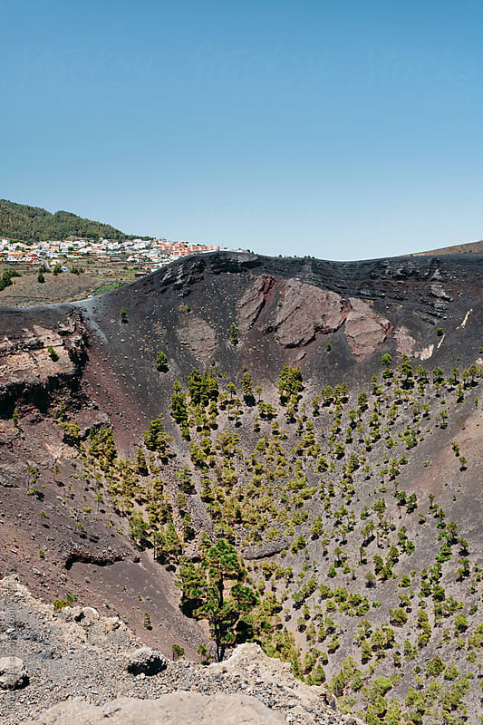 Trees growing in an old volcano. La Palma, Canary Islands. by Liam Grant for Stocksy United
