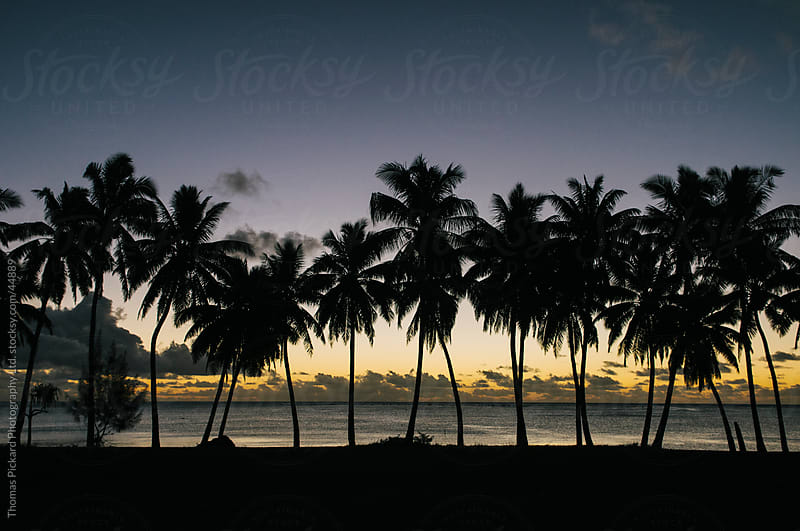 Palm tree silhouettes at sunset, Aitutaki Island, Cook Islands. by Thomas Pickard for Stocksy United