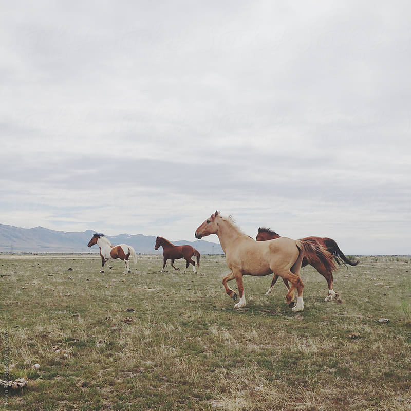 Trotting Wild Horses by Kevin Russ for Stocksy United