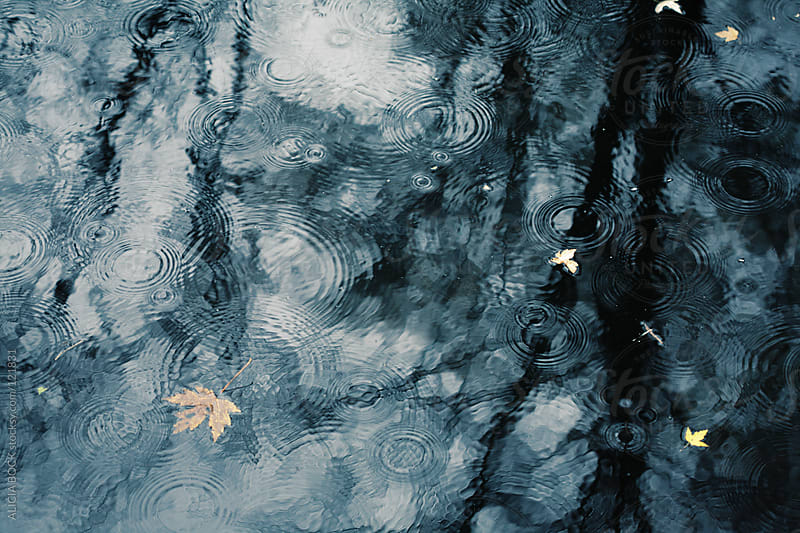 Reflections on a Rainy Day by ALICIA BOCK for Stocksy United
