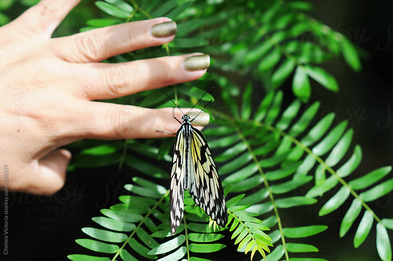 A woman touching a butterfly by Chelsea Victoria for Stocksy United
