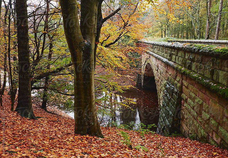 Stone bridge and autumnal woodland. Derbyshire, UK. by Liam Grant for Stocksy United