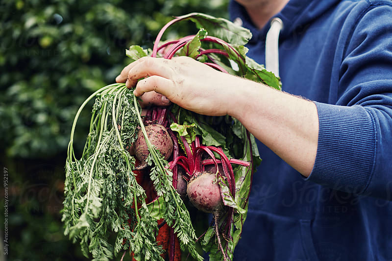 Man holding beetroot by sally anscombe for Stocksy United
