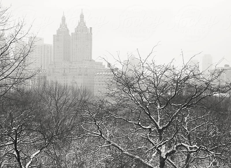 New York Winter - Looking out over Snow-Covered Trees by Vivienne Gucwa for Stocksy United