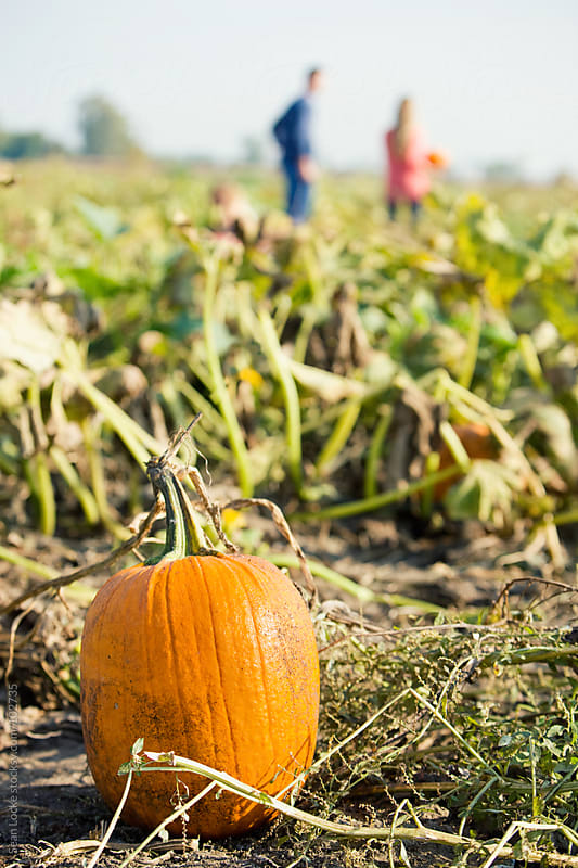 Pumpkins: Pumpkin In Foreground With Family In Background by Sean Locke for Stocksy United