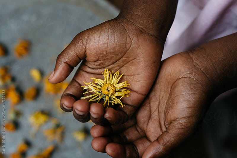 African American girl holding a yellow marigold flower in her palms by Gabriel (Gabi) Bucataru for Stocksy United