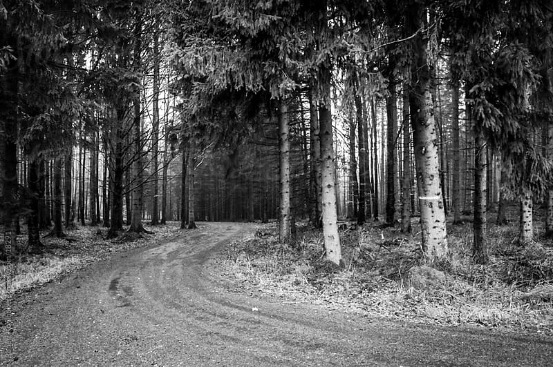 Street in the wet forest at autumn by Robert Kohlhuber for Stocksy United