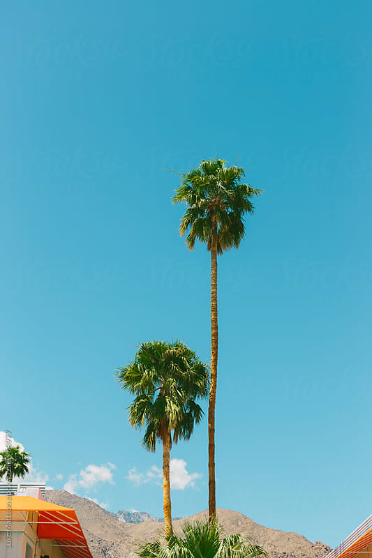 Two Palm Trees Standing Against Sunny Blue Sky by Luke Mattson for Stocksy United