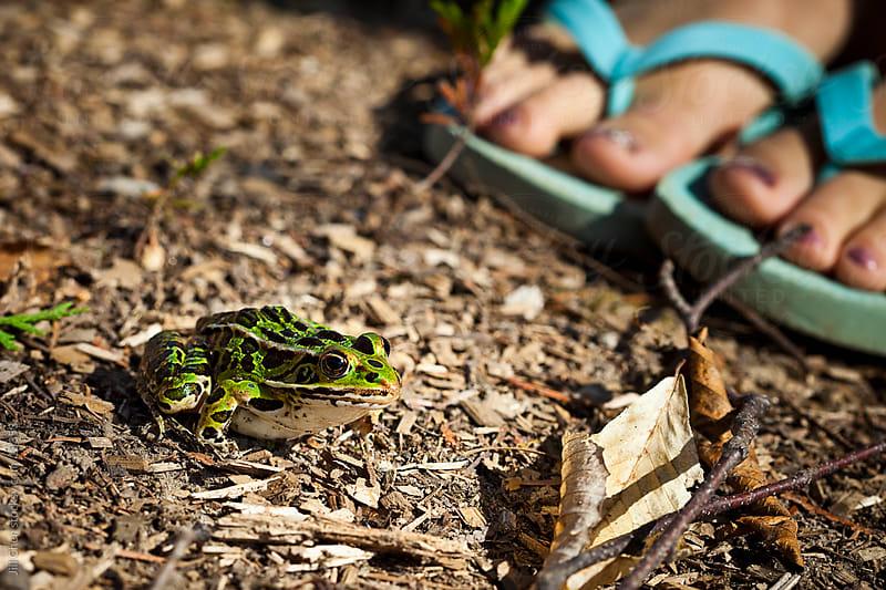 Leopard Frog by Jill Chen for Stocksy United