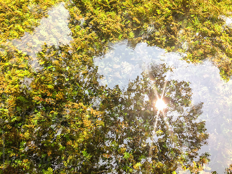 Sun Reflected in a Clear Shallow Water by Mosuno for Stocksy United