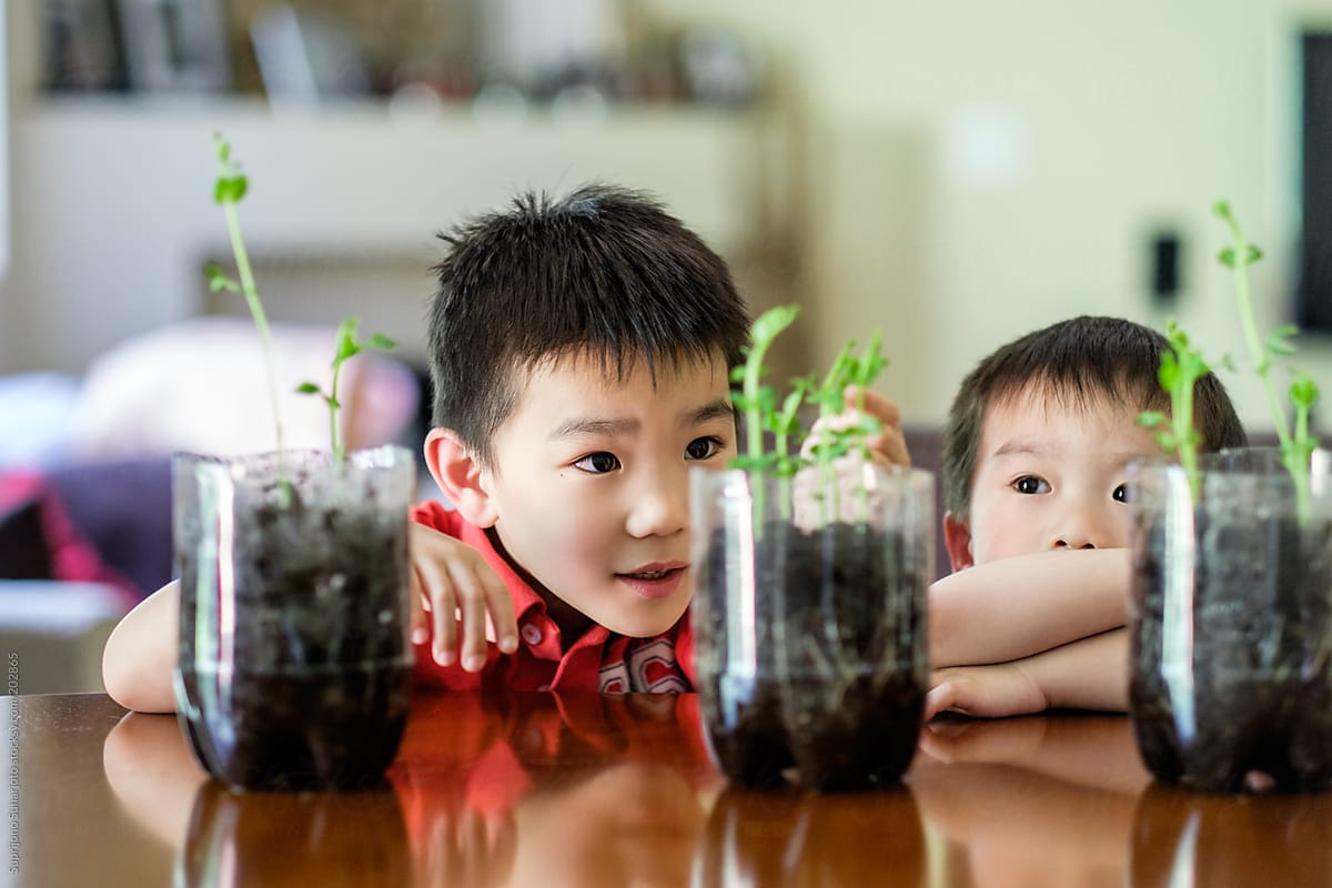 Asian boys watching the growth of their plant as part of the science  project by Suprijono