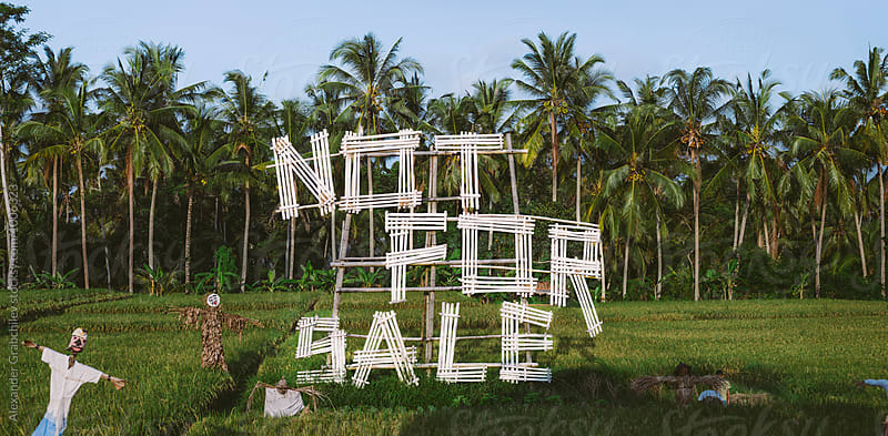Not for sale text in Rice Field by Alexander Grabchilev for Stocksy United