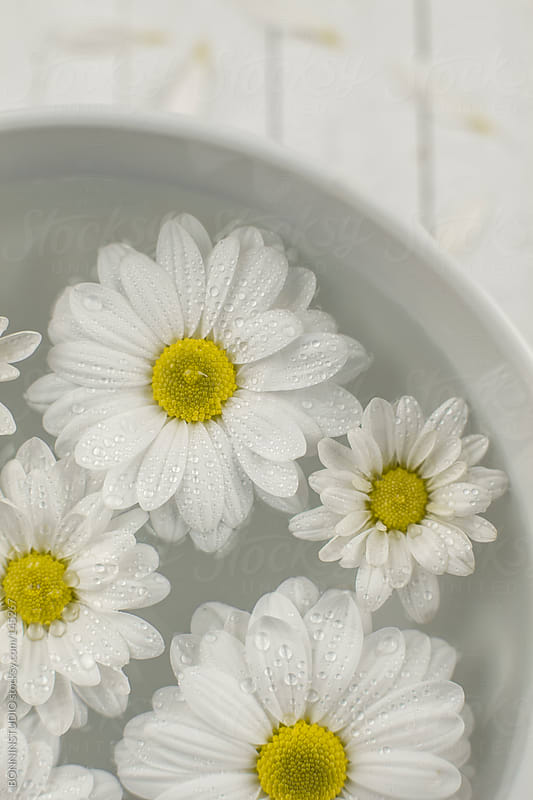 Closeup of daisies in a bowl. Wooden background with petals. by BONNINSTUDIO for Stocksy United
