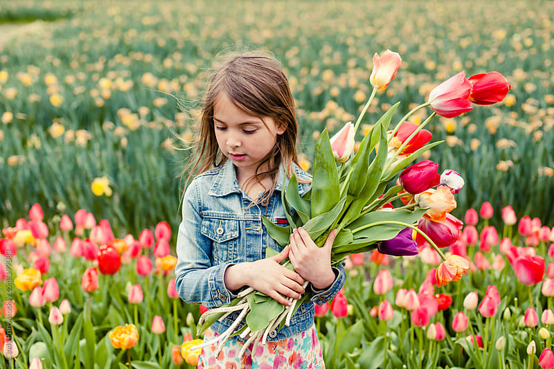 Little girl in a field of colorful flowers picking tulips by Cindy Prins for Stocksy United