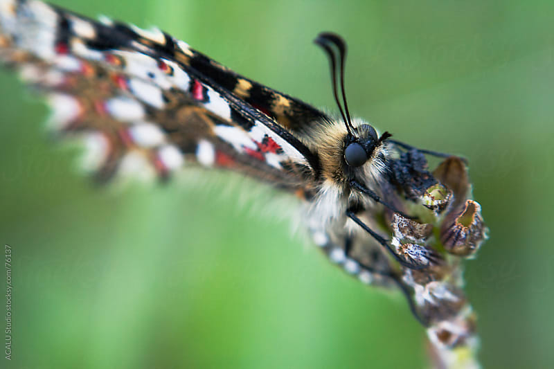 Macro of a butterfly with folded wings sleeping by ACALU Studio for Stocksy United