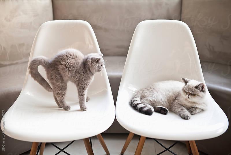 Sleepy Kittens by Jill Chen for Stocksy United
