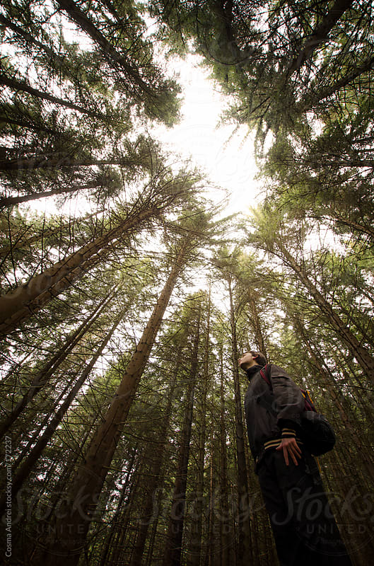 Man looking up in a green pine tree forest  by Cosma Andrei for Stocksy United