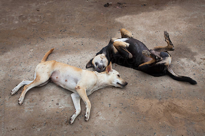 Two dogs lying on ground and making fun by PARTHA PAL for Stocksy United
