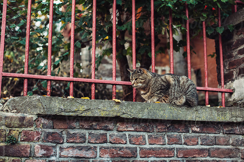Cute Cat on the Street by Mosuno for Stocksy United