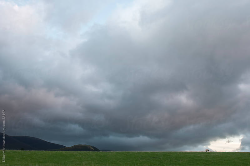 Shot of dark storm clouds over a green field with a sheep. by Mike Marlowe for Stocksy United