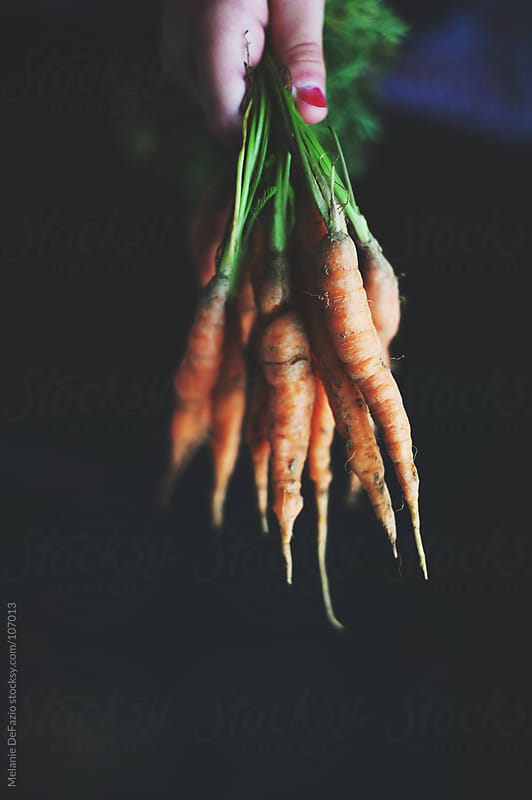 carrots by Melanie DeFazio for Stocksy United