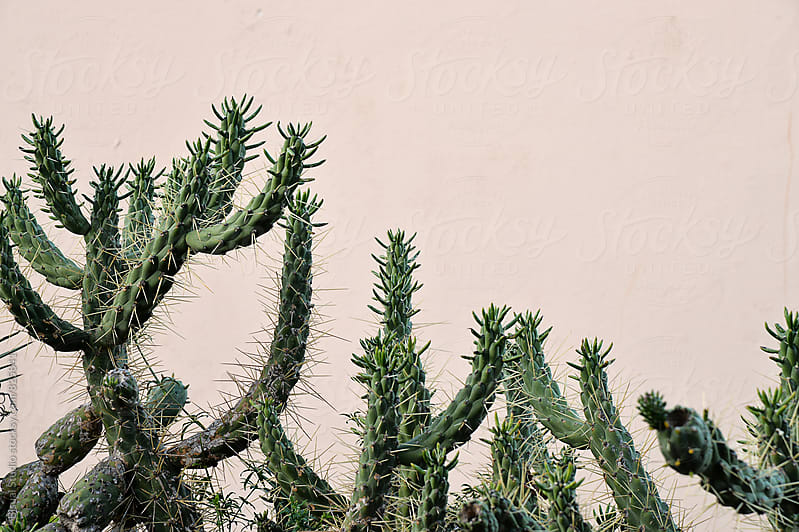 Cactus on the island by Bisual Studio for Stocksy United
