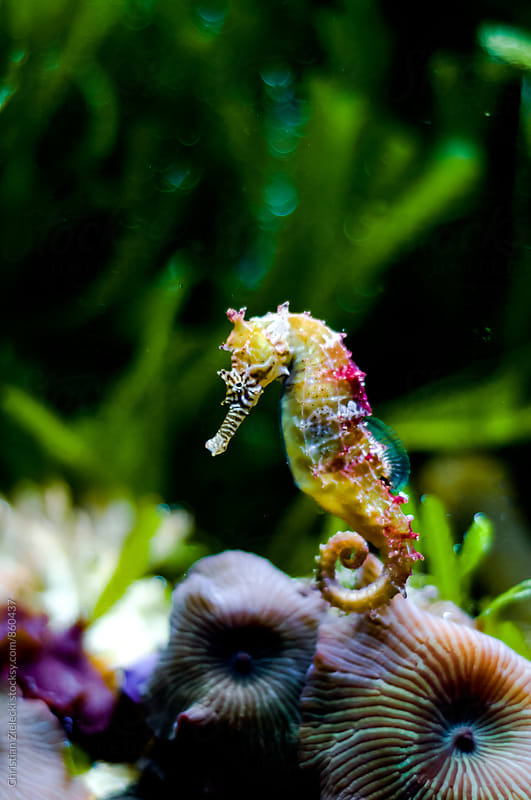 a rainbow coloured seahorse by Christian Zielecki for Stocksy United