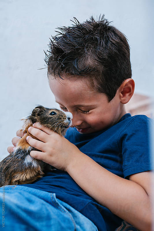 Cute Kid Playing with a Guinea Pig by VICTOR TORRES for Stocksy United