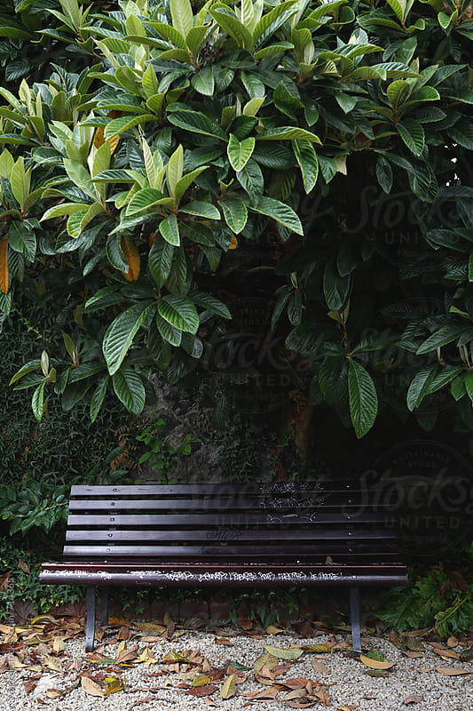 Simple park bench under a tree by Marcel for Stocksy United