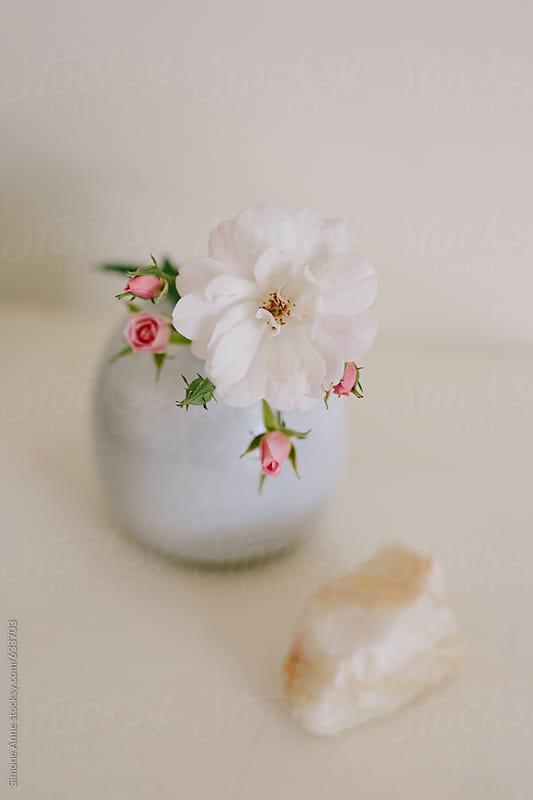 Single Rose In Bud Vase Stocksy United